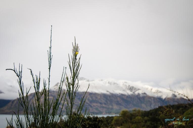 Queenstown-New-Zealand-2015-212