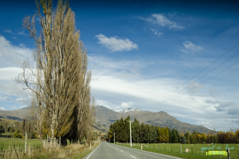 Queenstown-New-Zealand-2015-52